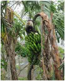 MonkeyOnBananas
