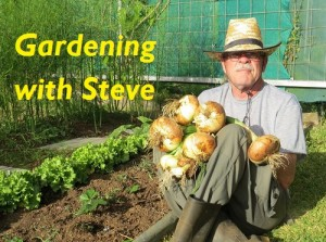 Gardening in Costa Rica with Steve