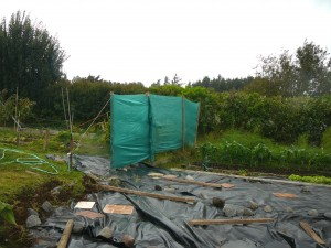 The vegetable garden in 2010 with rudimentary windbreaks and black plastic to kill the star grass.